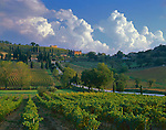 "Tuscany, Italy: A country road dotted with cypress trees curves through a patchwork of vineyards of the Val d""Orcia near the village of Castelnuovo dell'Abate"