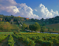 """Tuscany, Italy: A country road dotted with cypress trees curves through a patchwork of vineyards of the Val d""""Orcia near the village of Castelnuovo dell'Abate"""