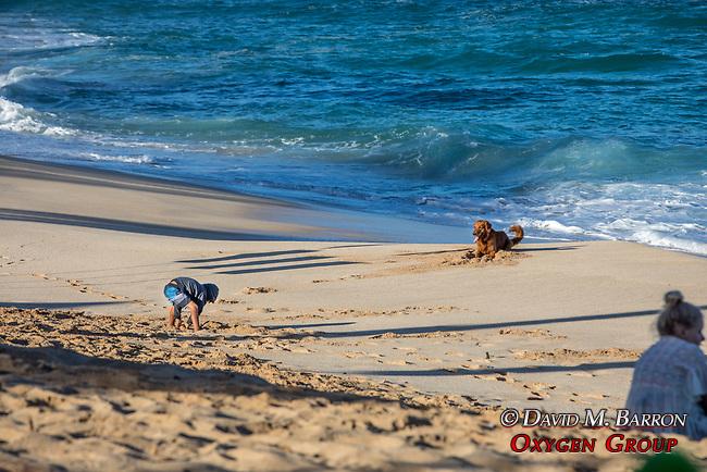 Boy & Dog On Sunset Beach