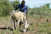 ETHIOPIA, Gambela, region Itang, Nuer village Pilual, boy Bhan 12 years old / AETHIOPIEN, Gambela, Region Itang, Dorf Pilual der Ethnie NUER, Hof von Herr Mun Kunen und Frau Neelam , sie sind vor dem Buergerkrieg aus dem Suedudan gefluechtet, Sohn Bhan 12 Jahre huetet Kuehe