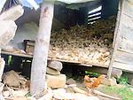 burton callas organic farm<br /> punta gorda, belize