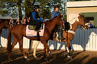 LOUISVILLE, KY - MAY 1: Rayya, trained by Doug Watson, exercises in preparation for the Kentucky Oaks at Churchill Downs on May 1, 2018 in Louisville, Kentucky. (Photo by Eric Patterson/Eclipse Sportswire/Getty Images)