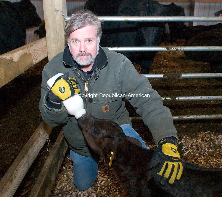 LITCHFIELD, CT- 03 MAR 07- 030307JT07- <br /> Cattle farmer John Morosani feeds a 12-day-old calf whose mother died during childbirth at Morosani's Laurel Ridge grass-fed cattle farm in Northfield on Saturday.<br /> Josalee Thrift Republican-American