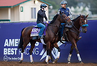 DEL MAR, CA - NOVEMBER 02: Ami's Mesa, owned by Ivan Dalos and trained by Josie Carroll, exercises in preparation for Breeders' Cup Filly & Mare Sprint at Del Mar Thoroughbred Club on November 2, 2017 in Del Mar, California. (Photo by Kazushi Ishida/Eclipse Sportswire/Breeders Cup)