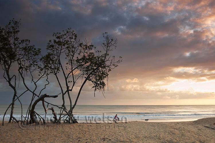 Mangrove trees on beach at dawn.  Kewarra Beach, Cairns, Queensland, Australia