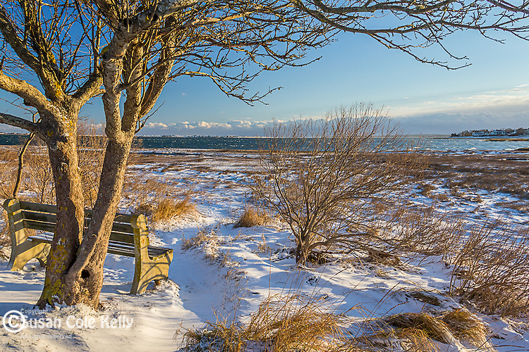 Fresh snow in Barnstable, Cape Cod, Massachusetts, USA
