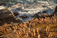 Pampas Grass and Surf, Ragged Point