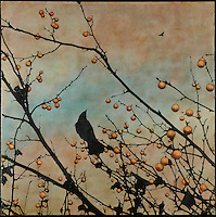 Encaustic painting with photo transfer of bird in branch with berries.