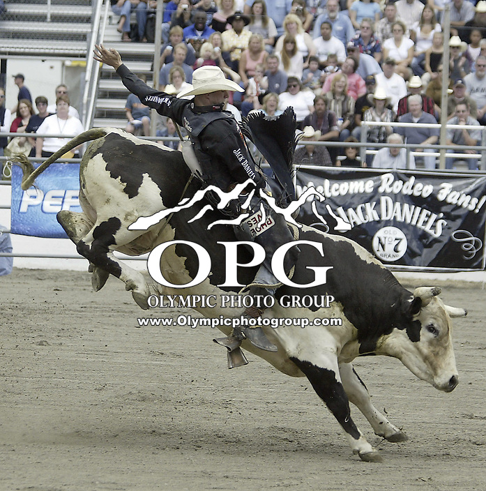 29 August 2004: Bull Rider Dustin Elliott ranked number one in the world rides the bull Dozer during the PRCA 2004 Extreme Bulls competition in Bremerton, WA.
