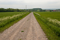 A gravel road leads towards a wooded drumlin hill, through a green hay field in the countryside near Meaford, Ontario.