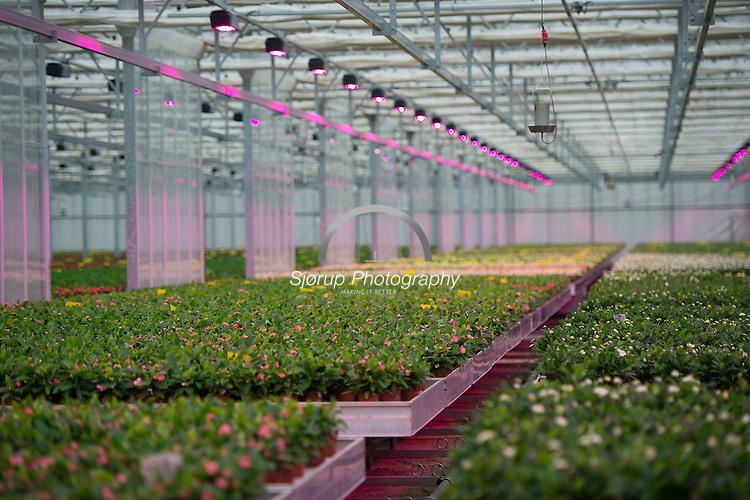 Fionia/Senmatic laver LED lys til gartnerier og har fået stor succes