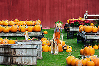 Decorative pumpkin display at a farm stand, Shaftsbury, Vermont, USA.