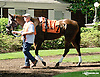 King Henry before The Hockessin Stakes at Delaware Park racetrack on 6/18/14