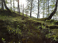 FOREST_LOCATION_90016