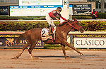 HALLANDALE BEACH, FL - December 09: Jala Jala, #2, takes the $300,000 Fasig-Tipton Clasico Internacional del Caribe for Mexico with Irad Ortiz up for trainer Fausto Gutierrez at Gulfstream Park on December 9, 2017 in Hallandale Beach, FL. (Photo by Carson Dennis/Eclipse Sportswire/Getty Images.)