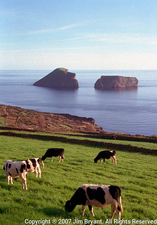 Dairy cattle graze under the backdrop of Split Rock on Terceira, Azores. Far out in the Atlantic Ocean, some 850 miles off the western coast of Lisbon, Portugal lies the 425-mile long archipelago of the Azores. (Jim Bryant Photo).....
