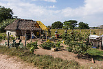 A traditional wattle and daub thatched-roof farm house in rural Mexico near Teacapan.  An additional building is under construction.