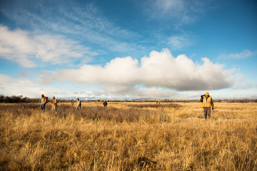 Members of the Missouri Headwaters Gun Dog Club return to the starting point after a retreiver hunt test at Missouri Headwaters State Park in Three Forks.