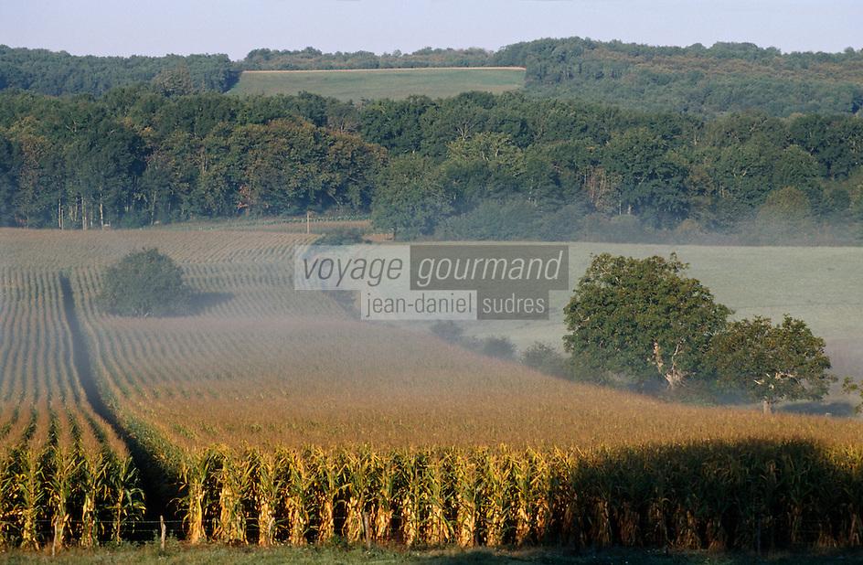Europe/France/Midi-Pyrénées/46/Lot/Vallée de la Dordogne/Env de Creysse: Brumes sur un champ de maïs
