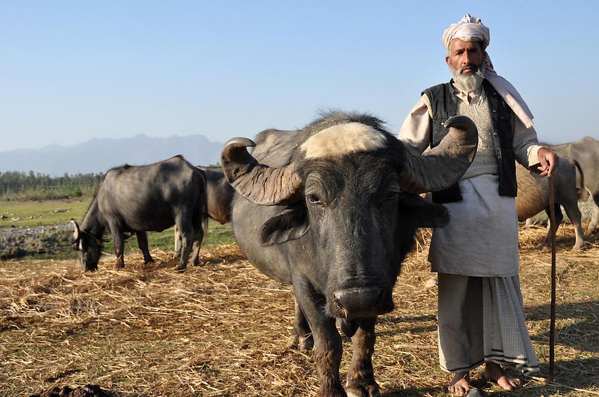 Along the Asan River, a Van Gujjar with his prized buffalo