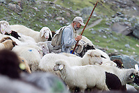 Pragraten am Grossvenediger, East Tyrol, Austria, September 2009. Shepherds round up their sheep during the annual Alm abtrieb on the alpine pastures above the Clara hut in the Umbaltal valley. The new 360 degree Ost Tirol hiking trail runs partly through the High Tauern National Park and is a unique high alpine trail of 360 kilometer. Photo by Frits Meyst/Adventure4ever.com