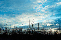 Dune grass and cloudy blue sky.