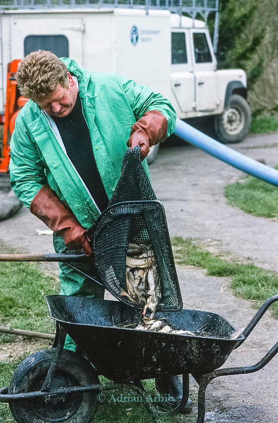"An environment agency workers net out  dead trout on the  River Kennet in one of Britain's worst ever incidents of river poisoning which killed more than three million fish.<br /> Scientists from the Agency say carryed out door-to-door enquiries at farms and businesses around the village of Little Bedwyn, Wiltshire, <br /> It is thought contaminants entered the river near the village and spread downriver to the Berkshire Trout Farm, near Hungerford, wiping out its entire stock of more than 150 tonnes of trout .<br /> The Environment Agency's area manager Stu Darby said: ""This is one of the largest incidents of its type in the region to date"