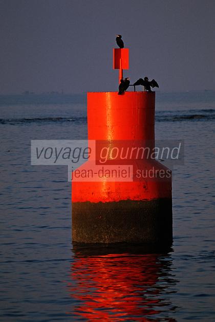 Europe/France/Bretagne/29/Finistère/Le Guilvinec: Cormorans sur une balise
