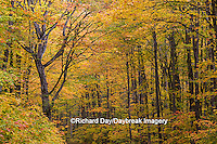 64776-01319 Trees in fall color Schoolcraft County Upper Peninsula Michigan