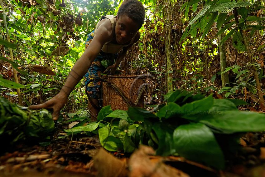 In the forest, a woman gathers together the small bundles of Koko thus prepared to be sold to the Bantus.///En forêt une femme réunit les petites bottes de feuilles Koko ainsi préparé pour les vendre aux bantous.
