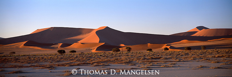 A landscape of windswept dunes in Sossusvlei National Park, Namibia.
