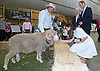 18.04.2014; Sydney Olympic Park, Sydney: KATE AND PRINCE WILLIAM <br /> visited the Royal Easter Show at the Sydney Olympic Park viewing a variety of produce and getting to know a &quot;Ram&quot;<br /> Mandatory Photo Credit: &copy;Dias/DIASIMAGES<br /> <br /> <br /> IMMEDIATE CONFIRMATION OF USAGE REQUIRED:<br /> DiasImages, 31 Chinnery Hill, Bishop's Stortford, ENGLAND CM23 3PS<br /> Tel:+441279 324672  ; Fax: +441279656877<br /> Mobile:  0777568 1153