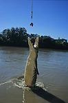 Austalie. Territoire du Nord. crocodiles