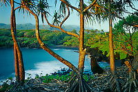 Hala trees at sunrise and Haleakala<br />
