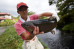 A staffer holds up a rainbow trout farmed at Kakishima Trout Farm in Fujinomiya, Shizuoka Prefecture Japan on 02 Oct. 2012.  Photographer: Robert Gilhooly