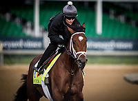 LOUISVILLE, KY - MAY 03: Patch, owned by Calumet Farm and trained by Todd Pletcher, exercises in preparation for the Kentucky Derby at Churchill Downs on May 03, 2017 in Louisville, Kentucky. (Photo by Alex Evers/Eclipse Sportswire/Getty Images)