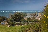 Europe/France/Normandie/Basse-Normandie/50/Presqu'île du Cotentin/Pointe de La Hague/Auderville: Ferme  :: // Europe/France/Normandie/Basse-Normandie/50/Manche/Auderville:  Farm