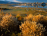 Mono Basin Scenic Area, CA <br /> Evening light on grasses and distant tufa formations at the south shore of Mono Lake
