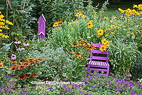 63821-207.14  Purple chair and Butterflyhouse in garden with Homestead Purple Verbena (Verbena canadensis), Blue Victoria Salvia (Salvia farinacea), Autumn Colors Black-eyed Susans (Rudbeckia hirta) and Indian Summer Black-eyed Susans, Purple Coneflowers (Echinacea purpurea), Autumn Joy Sedum, Marion Co. IL
