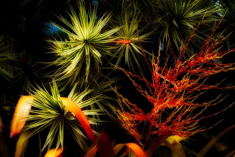 Close up of Bromelliad and tropical folliage. Kauai, Hawaii