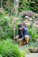 Troy Scott Smith Dividing bearded irises