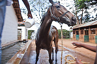 "A horse being ""cooled off"" with bucketed water after finishing a race at Ngong Racecourse."