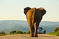 African Animals 2011