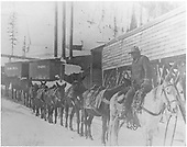 Pack train at mine or mill.<br /> D&amp;RGW  Ouray Branch, CO