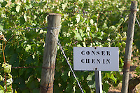 Chenin Blanc. Agricultural Research Institute (INRA, Institut Nationale de Recherche Agricole) in Angers (Beaucouze), Loire, France