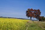 Europa, DEU, Deutschland, Rheinland Pfalz, Naturpark Saar-Hunsrueck, Agrarlandschaft, Herbst, Feld, Acker, Anbau, Senf, Bluete, Baeume, Obstbaeume, Kategorien und Themen, Landwirtschaft, Landwirtschaftlich, Agrar, Agrarwirtschaft, Erzeugung, Landwirtschaftliche Produkte, Natur, Naturfoto, Naturfotos, Naturfotografie, Naturphoto, Naturphotographie, Landschaft, Landschaften, Landschaftsfoto, Landschaftsfotografie, Landschaftsphoto, Landschaftsphotographie....[Fuer die Nutzung gelten die jeweils gueltigen Allgemeinen Liefer-und Geschaeftsbedingungen. Nutzung nur gegen Verwendungsmeldung und Nachweis. Download der AGB unter http://www.image-box.com oder werden auf Anfrage zugesendet. Freigabe ist vorher erforderlich. Jede Nutzung des Fotos ist honorarpflichtig gemaess derzeit gueltiger MFM Liste - Kontakt, Uwe Schmid-Fotografie, Duisburg, Tel. (+49).2065.677997, ..archiv@image-box.com, www.image-box.com]
