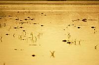 Centenas de jacarÈs as margens do lago Mamirau· no Amazonas.<br /> 09/12/2000<br /> Foto paulo Santos/Interfoto