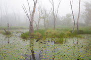 Wetlands area engulfed in fog at Bedell Bridge State Park in Haverhill, New Hampshire. This is a 38-acre park located along the Connecticut River and was the site of a historic two-span covered bridge, the second longest in the country.