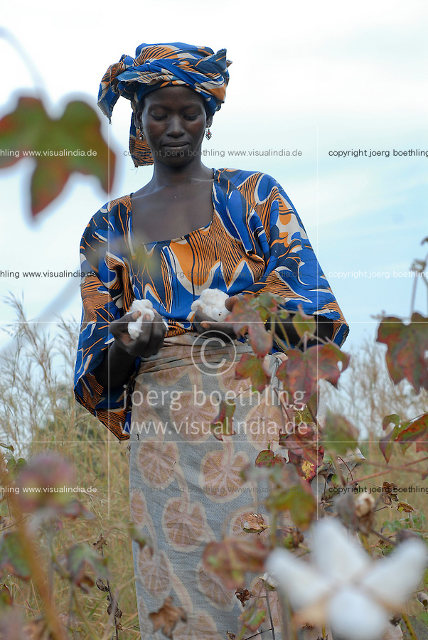 MALI , Bougouni, Fair trade und Biobaumwolle Projekt - Baumwollernte Frau Minata Samaké 31 Jahre aus Dorf Faragouaran | .MALI , Bougouni , women harvest fair trade organic cotton