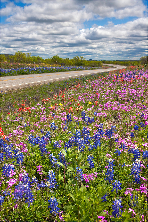 I had been photographing bluebonnets near Pontotoc, Texas, and was on my way home to the Hill Country when I stopped along Highway 71 to capture this image of a collage of Texas wildflowers along the road. I loved the mix of colors and shades.